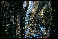 Reflections and falling leaves in creek. Congaree National Park, South Carolina, USA.