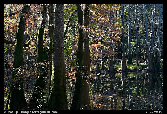 Cypress and Wise Lake on a sunny day. Congaree National Park (color)