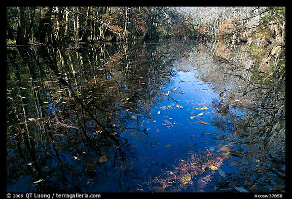 Fallen leaves and reflections in Wise Lake. Congaree National Park (color)