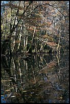 Trees and reflections, Wise Lake. Congaree National Park, South Carolina, USA.