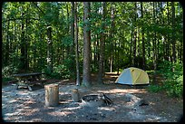 Longleaf Campground. Congaree National Park ( color)