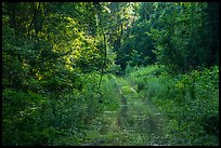Bates Ferry Trail. Congaree National Park ( color)