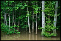Forest near Bates Bridge flooded by Congaree River. Congaree National Park ( color)