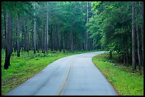 National Park Road. Congaree National Park ( color)