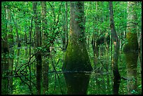 Flooded bottomland hardwood forest. Congaree National Park ( color)
