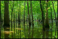 Flooded forest in summer. Congaree National Park ( color)
