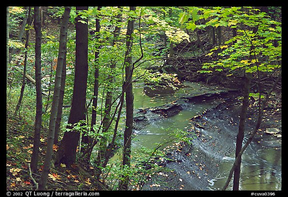 Trees and creek with Cascades near Bridalveil falls. Cuyahoga Valley National Park (color)