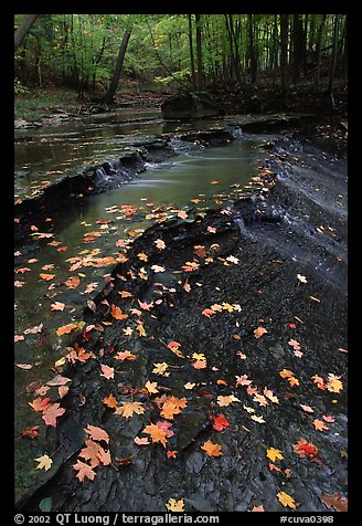 Fallen leaves and cascades near Bridalveil falls. Cuyahoga Valley National Park (color)