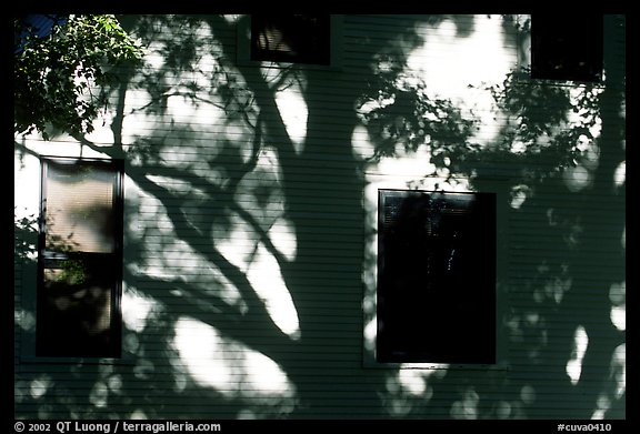 Tree shadows on wall. Cuyahoga Valley National Park (color)