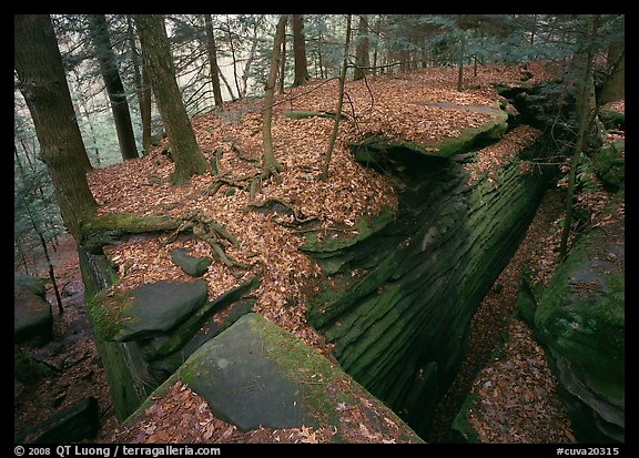 Sandstone cracks, moss, fallen leaves, and trees with bare roots. Cuyahoga Valley National Park (color)