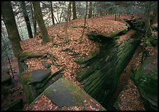 Sandstone cracks, moss, fallen leaves, and trees with bare roots. Cuyahoga Valley National Park, Ohio, USA. (color)