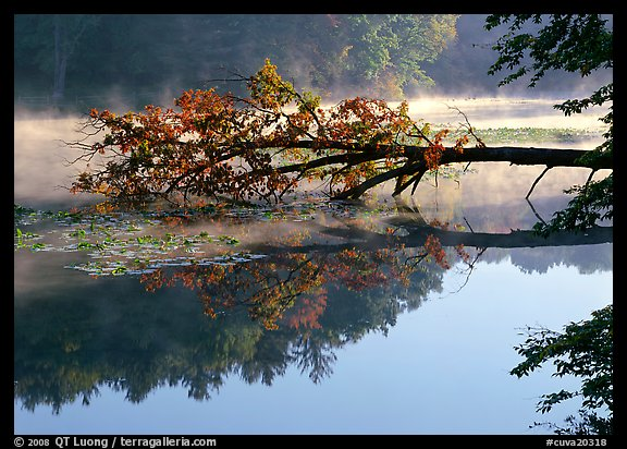 Fallen tree and mist, Kendal lake. Cuyahoga Valley National Park (color)