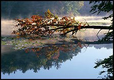 Fallen tree and mist, Kendal lake. Cuyahoga Valley National Park ( color)