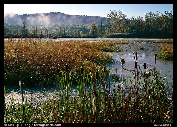 Reeds and Beaver Marsh, early morning. Cuyahoga Valley National Park (color)
