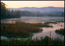 Grasses and Beaver Marsh at sunrise. Cuyahoga Valley National Park, Ohio, USA. (color)
