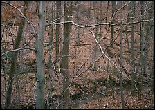 Branches and bare forest. Cuyahoga Valley National Park, Ohio, USA. (color)