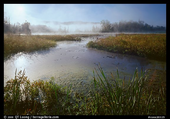 Aquatic plants, Beaver Marsh, and mist, early morning. Cuyahoga Valley National Park (color)