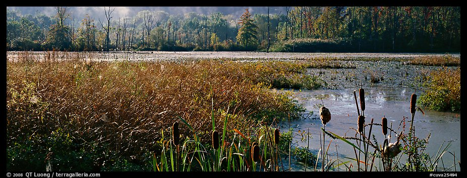 Wetlands scenery. Cuyahoga Valley National Park (color)