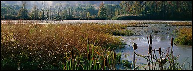 Wetlands scenery. Cuyahoga Valley National Park (Panoramic color)