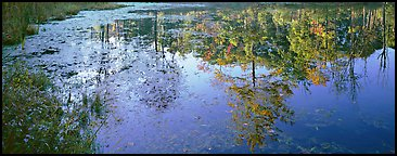 Trees reflected in pond in the fall. Cuyahoga Valley National Park (Panoramic color)