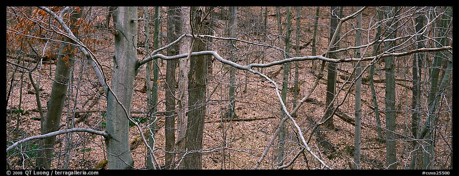 Criss-crossing branches in bare forest. Cuyahoga Valley National Park (color)