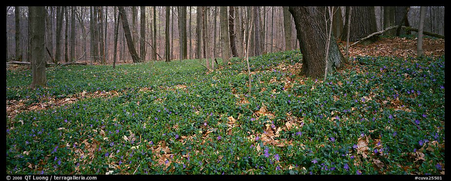 Forest floor with bare trees and early wildflowers, Brecksville Reservation. Cuyahoga Valley National Park (color)