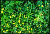 Close-up of plants and wildflowers. Cuyahoga Valley National Park ( color)