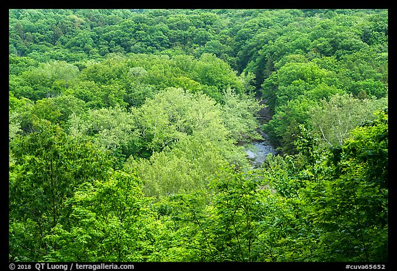 Tree canopy and Tinkers Creek Gorge in summer, Bedford Reservation. Cuyahoga Valley National Park (color)