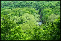 Tree canopy and Tinkers Creek Gorge in summer, Bedford Reservation. Cuyahoga Valley National Park ( color)