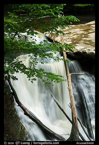 Great Falls with fallen trees, Bedford Reservation. Cuyahoga Valley National Park (color)