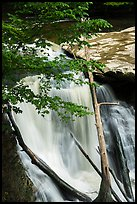Great Falls with fallen trees, Bedford Reservation. Cuyahoga Valley National Park ( color)