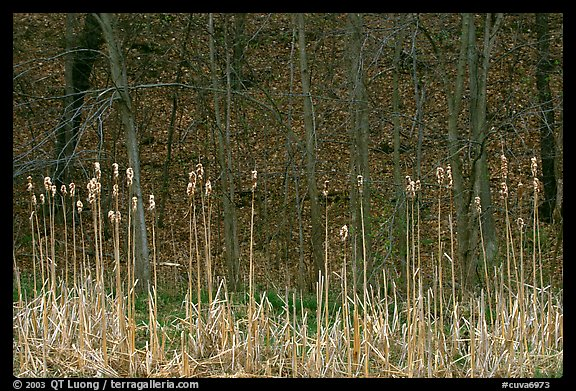 Grasses and trees in early spring. Cuyahoga Valley National Park (color)