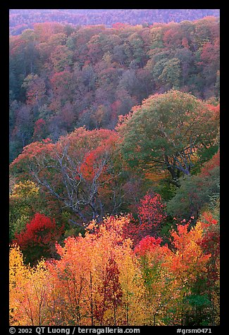 Trees in fall colors over succession of ridges, North Carolina. Great Smoky Mountains National Park (color)