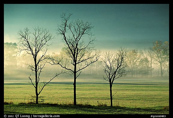 Three bare trees, meadow, and fog, Cades Cove, early morning, Tennessee. Great Smoky Mountains National Park (color)