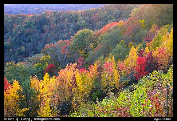 Ridges with trees in fall colors, North Carolina. Great Smoky Mountains National Park (color)