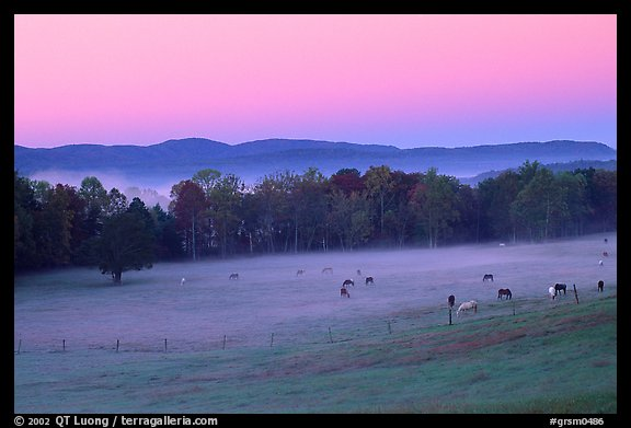 Pasture at dawn with rosy sky, Cades Cove, Tennessee. Great Smoky Mountains National Park (color)