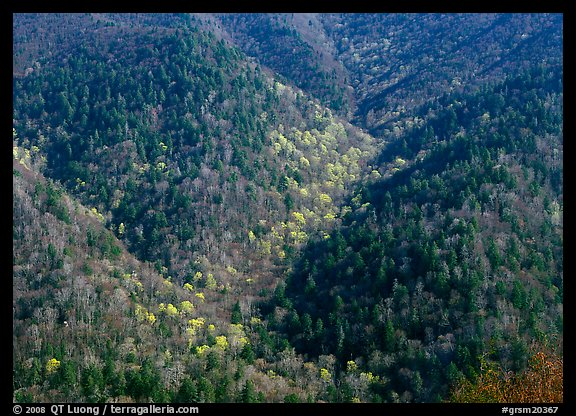 Hillside covered with trees in early spring, North Carolina. Great Smoky Mountains National Park (color)