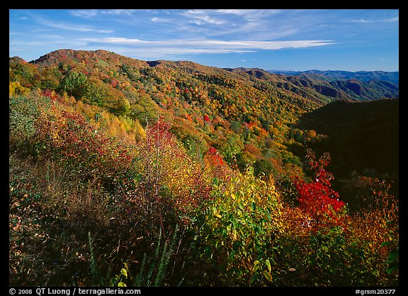 Hillsides covered with trees in autumn color near Newfound Gap, afternoon, North Carolina. Great Smoky Mountains National Park (color)