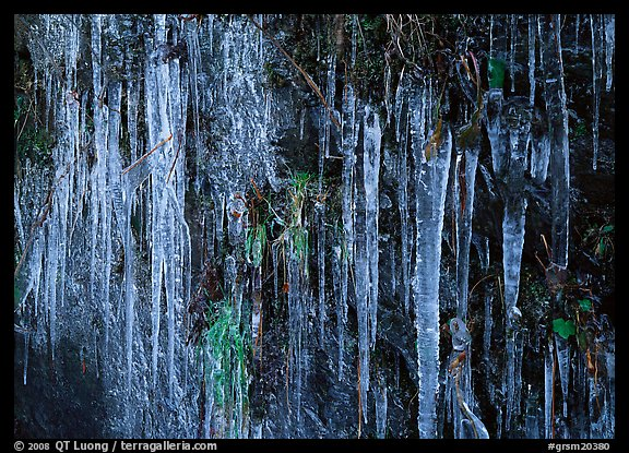 Icicles and green leaves. Great Smoky Mountains National Park (color)