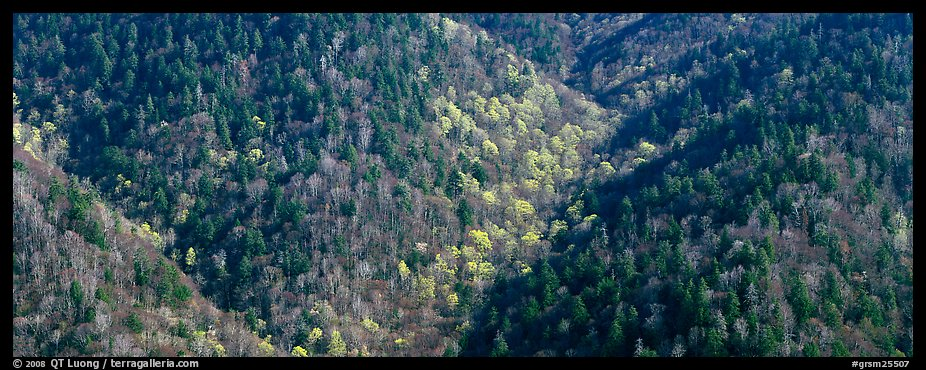 Appalachian hillside in early spring. Great Smoky Mountains National Park, USA.