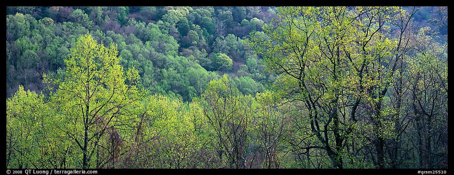 Spring landscape with new leaves. Great Smoky Mountains National Park (color)
