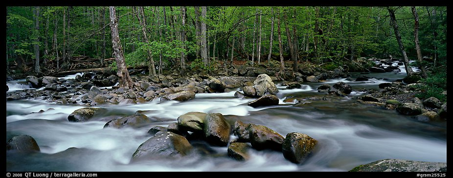 Stream flowing over boulders and spring forest. Great Smoky Mountains National Park (color)
