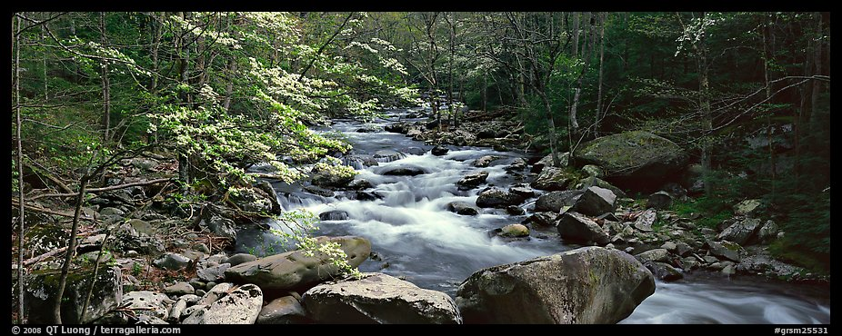 Forest scenery with dogwood blooming, stream, and boulders. Great Smoky Mountains National Park (color)