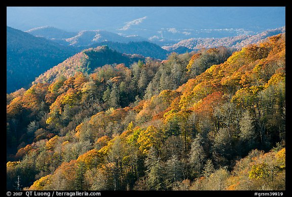 Hills covered with trees in autumn foliage, early morning, North Carolina. Great Smoky Mountains National Park (color)