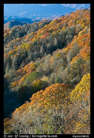 Slopes with forest in fall foliage, North Carolina. Great Smoky Mountains National Park (color)