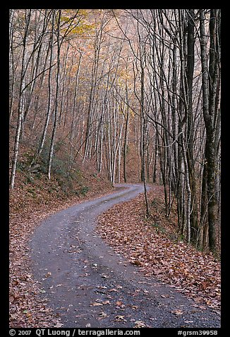 Unpaved Balsam Mountain Road in autumn forest, North Carolina. Great Smoky Mountains National Park (color)