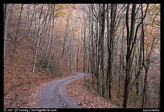 Unpaved road in fall forest, Balsam Mountain, North Carolina. Great Smoky Mountains National Park (color)
