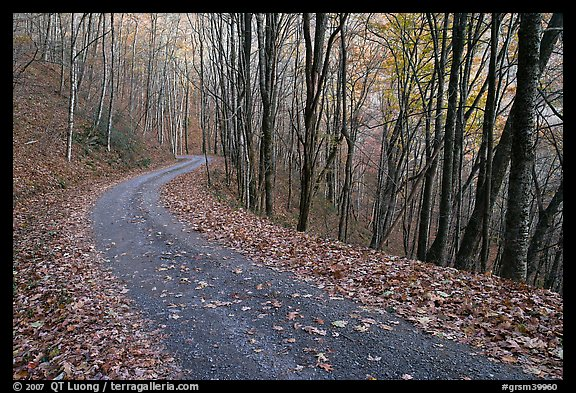 Balsam Mountain Road in autumn forest, North Carolina. Great Smoky Mountains National Park (color)