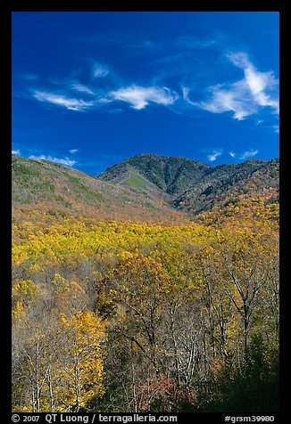 Mount Le Conte and slopes in autumn colors, Tennessee. Great Smoky Mountains National Park (color)