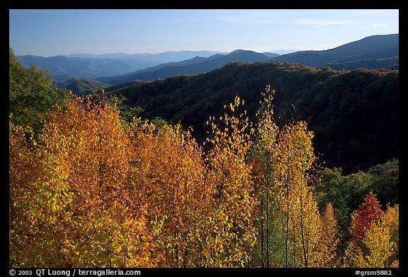 Trees in fall colors and backlit hillside near Newfound Gap, Tennessee. Great Smoky Mountains National Park (color)